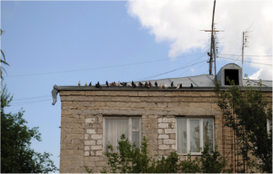 The tin roof of the nursing home